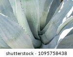palm springs  california  ...   Shutterstock . vector #1095758438