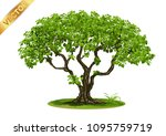 beautiful tree realistic  on a... | Shutterstock .eps vector #1095759719
