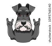 schnauzer dog portrait. rock... | Shutterstock .eps vector #1095768140