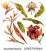 tropical foliage set with... | Shutterstock . vector #1095793964