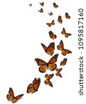 beautiful monarch butterfly... | Shutterstock . vector #1095817160