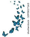 beautiful blue monarch... | Shutterstock . vector #1095817163