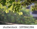 sunshine fresh green leaves ... | Shutterstock . vector #1095861386