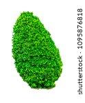 shrubs beautiful bush isolated  ... | Shutterstock . vector #1095876818