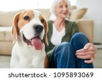 portrait of gorgeous purebred... | Shutterstock . vector #1095893069