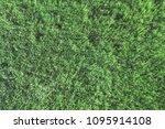 top view of green grass ... | Shutterstock . vector #1095914108