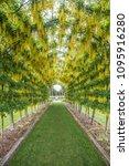 dunedin  otago new zealand...   Shutterstock . vector #1095916280