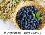 fresh blueberries and ripe oat... | Shutterstock . vector #1095932438