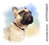 Stock photo cute french bulldog realistic drawing of boxer dog on watercolor background hand painted 1095936869