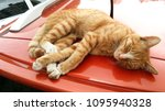 cat rest on car roof | Shutterstock . vector #1095940328