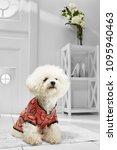 full length portrait of dressed ... | Shutterstock . vector #1095940463