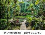 bali tropical garden  sanctuary ... | Shutterstock . vector #1095961760