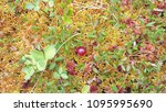 beautiful detail forest... | Shutterstock . vector #1095995690
