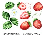 ripe berries strawberry... | Shutterstock . vector #1095997919