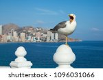 the seagull sits on a white... | Shutterstock . vector #1096031066