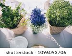 flat lay with green plants and... | Shutterstock . vector #1096093706