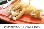 cat sits on the roof of the car | Shutterstock . vector #1096111598