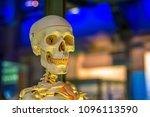 medical human skeleton model on ... | Shutterstock . vector #1096113590