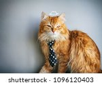 serious red cat in tie  painted ... | Shutterstock . vector #1096120403