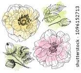 wild roses blossom branch... | Shutterstock . vector #1096152713