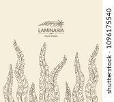 laminaria  laminaria seaweed ... | Shutterstock .eps vector #1096175540