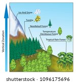 altitudinal zonation of forest... | Shutterstock . vector #1096175696