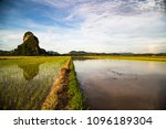 beautiful reflection in paddy... | Shutterstock . vector #1096189304