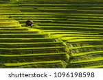 Beautiful Landscape Of Rice...