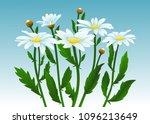 camomiles vector illustration.... | Shutterstock .eps vector #1096213649