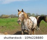 playful horse showing its tongue | Shutterstock . vector #1096228880