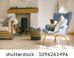dog pug is sitting on blue... | Shutterstock . vector #1096261496