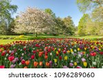 spring tulips bloom in front of ... | Shutterstock . vector #1096289060
