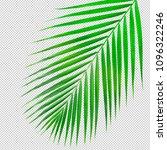 real palm leaf texture di cut... | Shutterstock . vector #1096322246