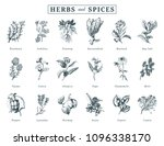 drawn herbs and spices vector... | Shutterstock .eps vector #1096338170
