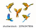 set of macaw parrot isolated on ... | Shutterstock . vector #1096347806