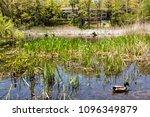 may 21  2018   toronto  ontario ...   Shutterstock . vector #1096349879