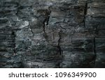 Small photo of Coal firebrand charred wood after a fire in the forest