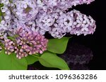 spring branch of blossoming... | Shutterstock . vector #1096363286