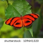 Red Butterfly On The Leaf