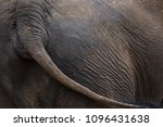 elephant wagging tail | Shutterstock . vector #1096431638