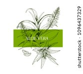 hand drawn aloe vera branch and ... | Shutterstock .eps vector #1096437329
