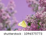Bright Yellow Butterfly On...