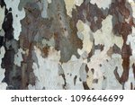 The Close Up Of The Bark Of A...