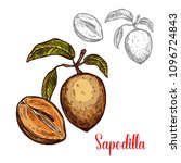 sapodilla fruit sketch isolated ... | Shutterstock .eps vector #1096724843