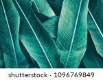 Tropical Leaves  Large Green...