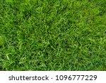 background of green grass.... | Shutterstock . vector #1096777229