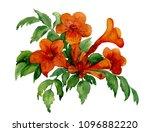trumpet vine flowers hand drawn ... | Shutterstock . vector #1096882220