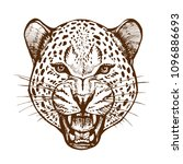 roaring leopard head with bared ... | Shutterstock .eps vector #1096886693