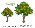 orange and tangerine tree 3d... | Shutterstock .eps vector #1096892996