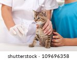 Little kitten at the veterinary - getting a vaccine - stock photo